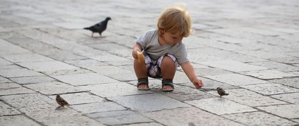 Kleinkind streckt einem Vogel Futter hin